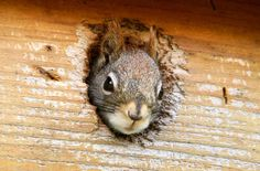 17 amusing squirrel photos for National Squirrel Day - http://www.sfgate.com/national/article/17-amusing-squirrel-photos-for-National-Squirrel-6774765.php#utm_sguid=165305,b02644c4-bf13-b8d4-ccb1-cee622f13e83 #photography #photo