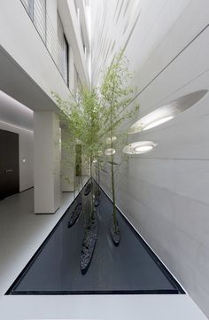 Image 1 of 47 from gallery of Rozan Residence / RYRA Studio. Photograph by Parham Taghioff Parametric Architecture, Facade Architecture, Sustainable Architecture, Residential Architecture, Lanscape Design, Australia House, Commercial Landscaping, Rustic Pergola, Interior Garden