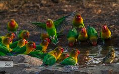Photo Lovebirds 6 by Libor Ploček on 500px