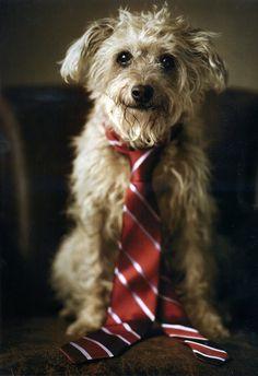 dog in tie
