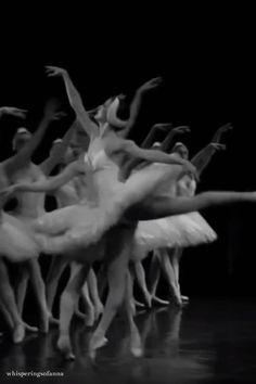 Ballet Gif, Ballet Dance Videos, Ballet Dancers, Ballerinas, Dance Photos, Dance Pictures, Ballerina Workout, Swan Lake Ballet, Ballet Dance Photography