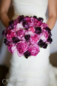 STUNNING Bouquet Showcasing: Purple Tulips & Hot Pink/Pink Cabbage Roses.... Lovely****