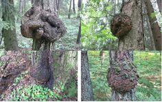 Работа с капами ~ Резьба по дереву