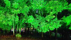 """""""Vegetação Iluminada II"""" - Restaurante do Parque dos Pinheiros, Farroupilha RS BR By @luccks (Galaxy Note4 full res)"""