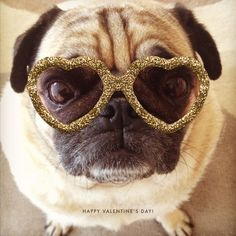bring out the bling - pug love