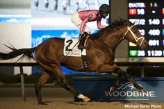 Leavem in Malibu scored a front-running victory in the $125,000 Valedictory Stakes (Grade 3) for Mark Casse, who finished second in the trainer standings for the first time in over a decade as Norm McKnight took the lead with a five-win performance during Woodbine's final program of the 2017 Thoroughbred season on Sunday. Jockey Patrick Husbands …