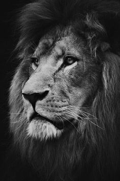 King Leo!!!!! Incredible! So Strong, So Fierce, So Majestic! mt~
