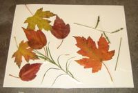 Cards_and_leaves_002