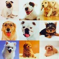 Collage of Dogs Art Print ~ Ready To Hang Picture~ 60cm Square $46.00 www.wallartroad.com.au #wallartroad #animaldecor #decor
