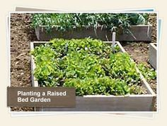 Planting a Raised Bed Garden