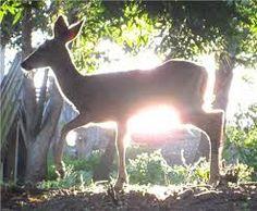 「sunlight morning」の画像検索結果