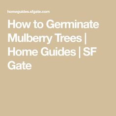 How to Germinate Mulberry Trees | Home Guides | SF Gate