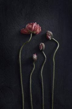 Floral: The taste of Petrol and Porcelain   Interior design, Vintage Sets and Unique Pieces www.petrolandporcelain.com