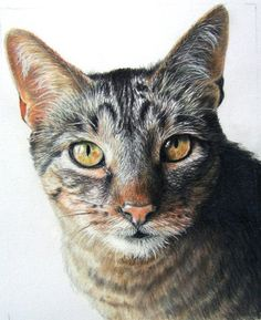 Hand-Drawn Custom Pet Portrait 11 x 14 Colored Pencil Art by Carla Kurt cat dog horse memorial