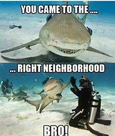 the funniest shark meme funny captions funny humor funny memes animal funny Funny Animal Jokes, Cute Funny Animals, Funny Animal Pictures, Funny Cute, Haha Funny, Funny Stuff, Funny Images, Funny Humor, Funny Men