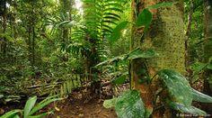dsc1028lowland-rainforest-landscapesalawatiwest-papua31-05-2011bvanelegem.jpg (800×446)
