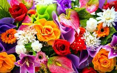 Colorful flowers wallpapers for colorful flower backgrounds Flower Background Wallpaper, Flower Backgrounds, Colorful Wallpaper, Beautiful Flowers Wallpapers, Spring Bouquet, Rose Bouquet, Colorful Roses, Different Flowers, Gras