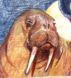 Walrus drawing copied from photo