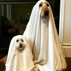 """Ghastly! Or is it """"Ghostly""""!"""
