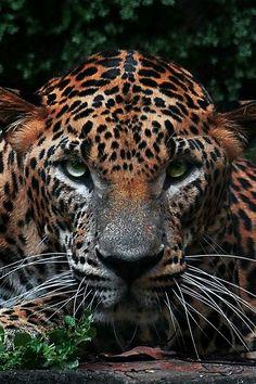 .Gorgeous!.. leopard?