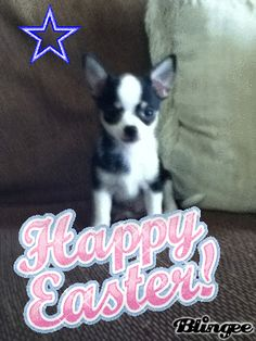 kirby says happy easter