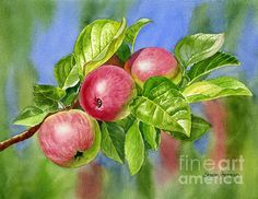 Red Cider Apples With Background by Sharon Freeman - Red Cider Apples With Background Painting - Red Cider Apples With Background Fine Art Prints and Posters for Sale