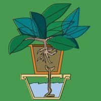 Nos vamos de vacaciones, las plantas se quedan en casa. Si tenemos un sistema de riego automático, puede utilizarse para regar el jardín o la huerta. Esto consiste en programar las válvulas...