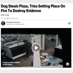 12 Of The Funniest (And Weirdest) Dog Headlines Of 2015