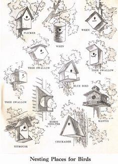 Bird House Kits Make Great Bird Houses Bird House Plans Free, Bird House Kits, Homemade Bird Houses, Bird Houses Diy, Bird House Feeder, Bird Feeders, Squirrel Feeder, Birdhouse Designs, Birdhouse Ideas