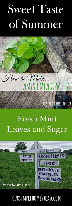 How to Make Meadow Tea - Growing up in Pennsylvania fresh mint grew everywhere.   In ditches alongside the road, in gardens, in pots and always in the kitchen gardens of the neighboring  Amish women.