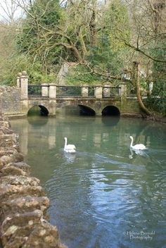 Garden bridge - I'd love to be there watching the swans in person.