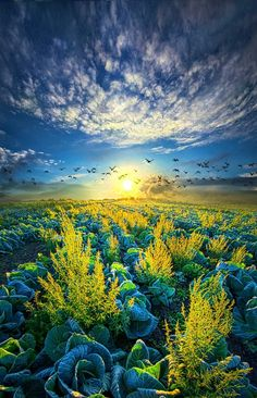 """""""That Voices Never Shared"""" Wisconsin Horizons By Phil Koch. ..."""