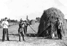 Hooi oogst. Crop Protection, Picture Credit, Old Pictures, Once Upon A Time, Ancestry, Farmers, Agriculture, Childhood Memories, Vintage Photos