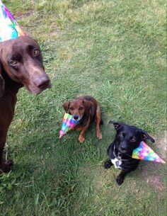 View from the Birdhouse: Dear Abby: When the Pack Grows Smaller - Helping Grieving Dogs