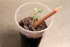 via Futuro do Presente | Sprout