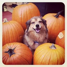 Stan is happy in the Fall - Happy Halloween!!!