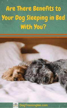 Should you let your dog sleep in your bed with you? We cover some amazing health benefits to sleeping with your dog, and some of the reasons you should not. Read our article for more.