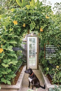 Vertical Garden | Better Homes & Gardens Magazine | East Sac Farms #ediblegarden #verticalgarden #urbangarden