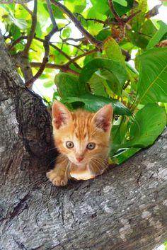 Fuzzy kitten in a tree @fluffyorfuzzy