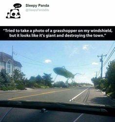 Giant bug lol