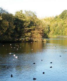 Water World: Ecology