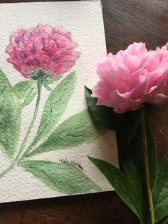 Peonies are blooming in the garden. Watercolor by Tisha Sheldon