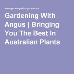 Bringing You The Best In Australian Plants And Gardening Australian Plants, Native Plants, Bring It On, Gardening, Good Things, Lawn And Garden, Horticulture