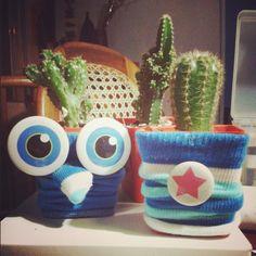 Mini cactus Sir Cus