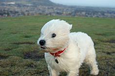 """ 'Tis a wee bit breezy today."""