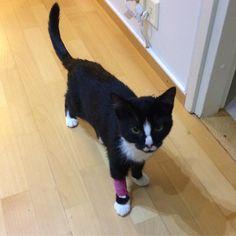 After a long day at the #veterinarian  Now Im okay  by Zero #cat #evidensia #evidensiaeläinlääkäripalvelut