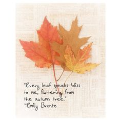 Fall Leaves Autumn Emily Bronte Quote FoilageTawny Brown Red Orange... (39  CAD