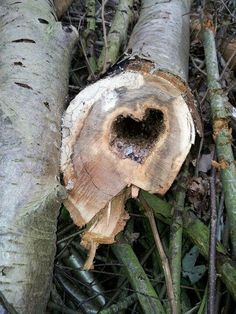 natural heart shape inside a tree branch I Love Heart, With All My Heart, Happy Heart, Heart In Nature, Heart Art, Collateral Beauty, Heart Pictures, Love Symbols, Felt Hearts