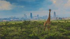 Photographie : l'Afrique prend la pose au Festival Photo La Gacilly
