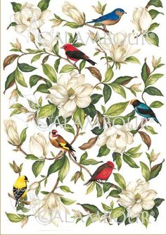 CAL 279 - Calambour Paper for classic Decoupage. Pattern : magnolia and red, yellow, black, orange and blue birds standing on small branches with white background. Details: measures 50 x 70 cm, printing on 80 gr/mq paper sheet
